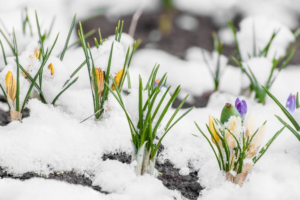 Nature vs. Winter: 4 Ways Your Lawn Can Combat the Frost